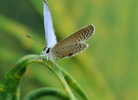 一组停在绿植上的蝴蝶图片