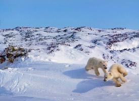 唯美冬天雪景高清桌面壁纸