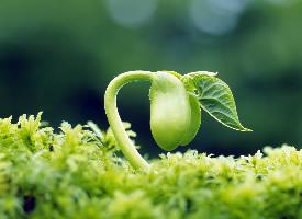 绿色护眼高清植物桌面壁纸