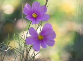 初冬时节盛放的美丽小花