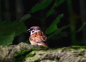 一组石头上的小鸟图片