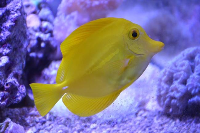 点击大图看下一张:一组美妙好看的观赏鱼图片