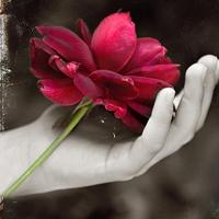 谁是你手心的宝 呵护的花