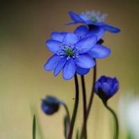 我是一朵只为爱绽放的花