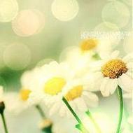 唯美意境花卉風景qq頭像圖片大全