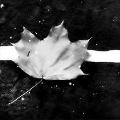不同风格的qq伤感黑白经典头像图片