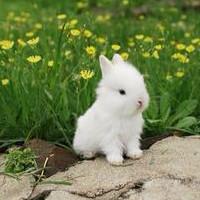 草地上毛绒绒小巧可爱的兔子头像大全