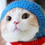萌萌哒可爱的猫咪狗狗qq动物头像图片