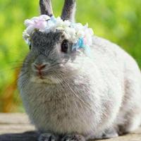 超萌可爱的动物兔子微信头像图片