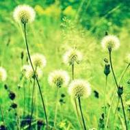 大自然清新绿色风景微信头像图片