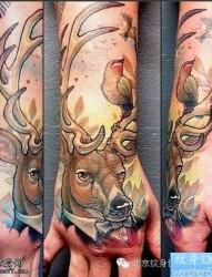 一款手部彩色彩色羚羊纹身图案