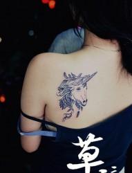 美女肩胛独角兽