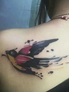 后背一只小燕子纹身图案很可爱