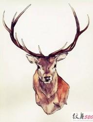 好看的麋鹿纹身手稿素材