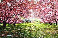 樱花林油画图片素材