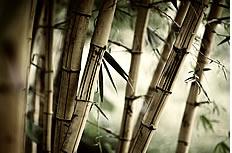 竹子图片素材