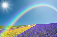 陽光彩虹薰衣草高清圖片