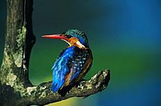 森林医生啄木鸟高清图片