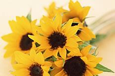 黃色太陽花花束高清圖片