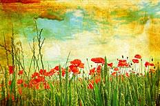 怀旧风格小麦罂粟花图片