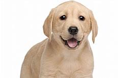 可爱萌宠狗狗图片