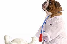 另类狗狗医生图片