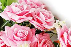 粉色月季花束图片