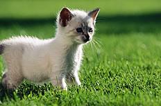 小草地貓咪圖片