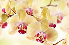 唯美黄色兰花图片