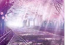 唯美紫色樱花背景图片