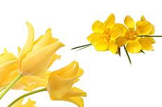 黄色蕙兰花图片