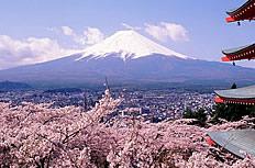 日本富士山樱花风景图片