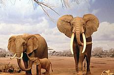 高清大象图片