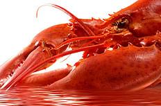 高清大年夜龙虾图片