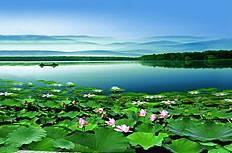 美丽的莲花池图片
