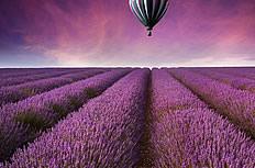 薰衣草花海上的热气球图片