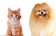 小猫小狗图片