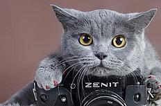 灰色小猫图片