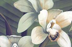 兰花油画图片