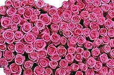 心形玫瑰花花束图片