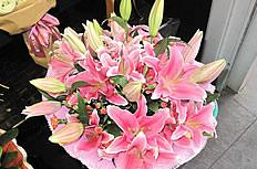 粉色百合花束圖片