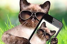 小猫拿手机图片