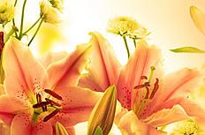 唯美黄色百合花图片