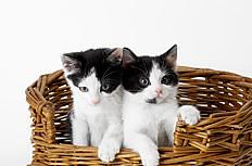 可愛小貓咪圖片
