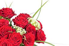 红玫瑰花图片