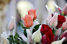 情人节玫瑰花图片