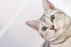 可爱歪脖猫咪图片