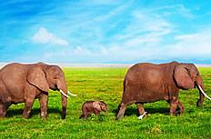 一家三口大象图片