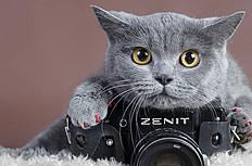 可愛小貓圖片