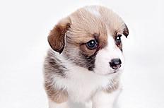 可愛小狗圖片